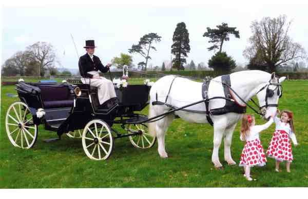 victoria-wedding-carriage-horse